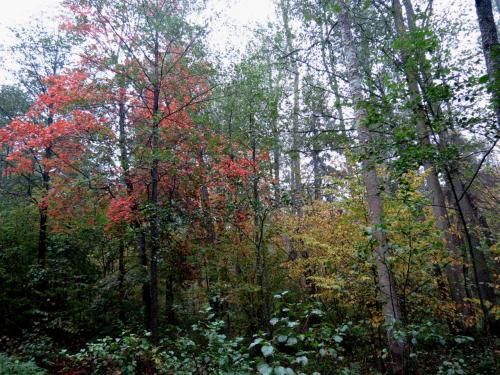 Bialowieza en automne
