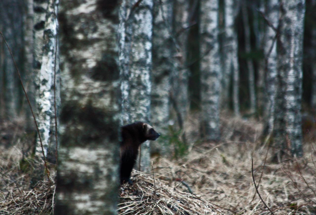 Finlande Carélie
