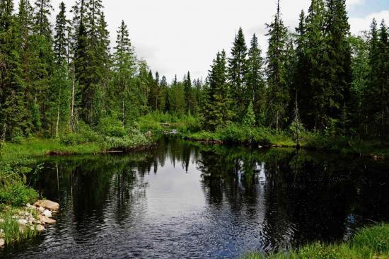 Petit lac dans la taiga finlande