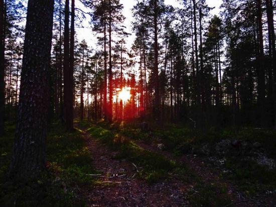 Taiga finlandaise 2