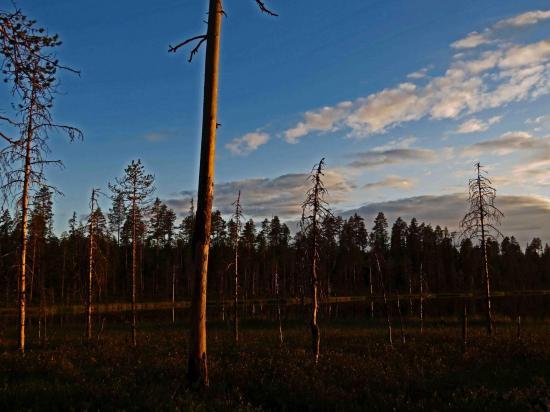 Taiga finlandaise crepuscule 2