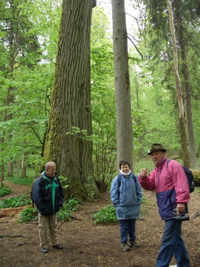 Visite de la forêt primaire