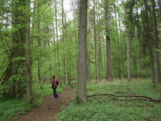 La forêt primaire et ces géants