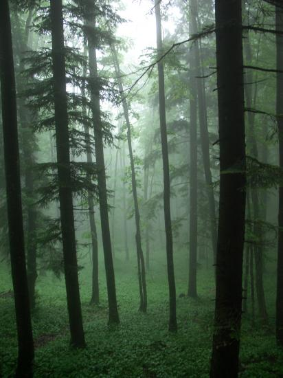 Ambiance forestière Slovénie mai 2007