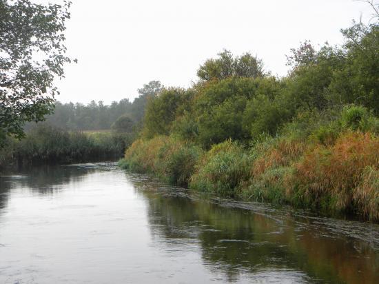 Rivière à saumon et truite, brochet, perche...