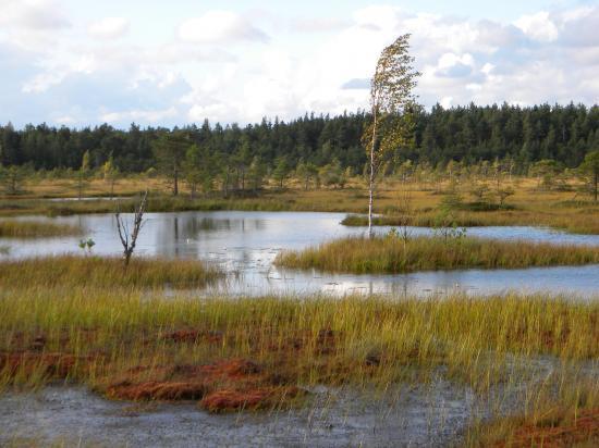Lacs de tourbière