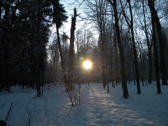 Aux aurores, Bialowieza