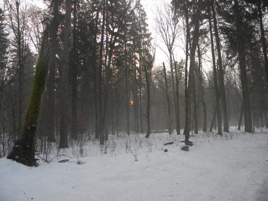 Paysage forestier, Bialowieza