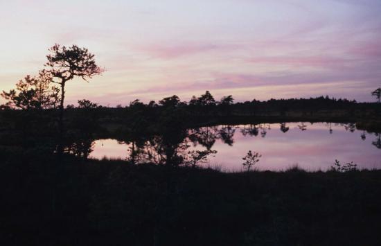 Lac de tourbière Soomaa