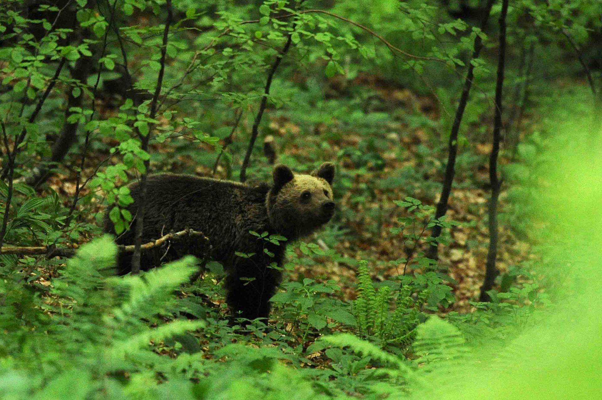Été Slovénie La montagne aux ours du 20 au 28/06/2020 - Privé