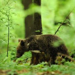 Été Slovénie La montagne aux ours du 06/07 au 14/07/2020 - 4 places disponibles