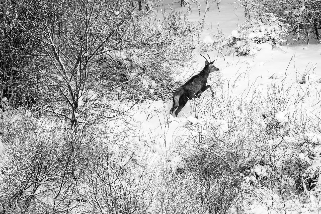 Hiver Pologne - La plus grande meute de loups du 19 au 28/02/2022 - Privé