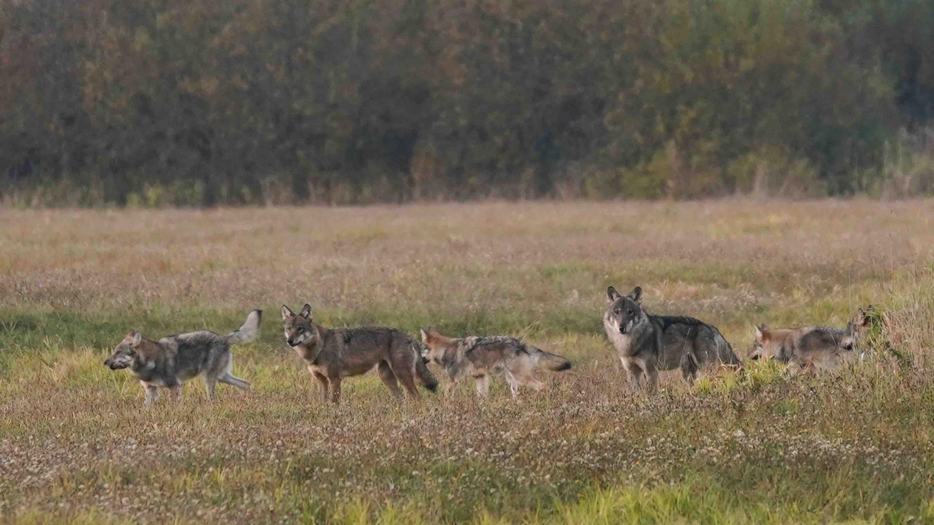 Automne Pologne La forêt impériale du 6 au 19/10/2019 14 jours, à la carte, privé