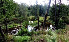 estonie-septembre-2012-721.jpg
