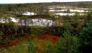 estonie-septembre-2012-861.jpg