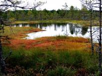 estonie-septembre-2012-900.jpg