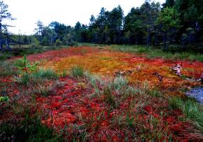 estonie-septembre-2012-966.jpg