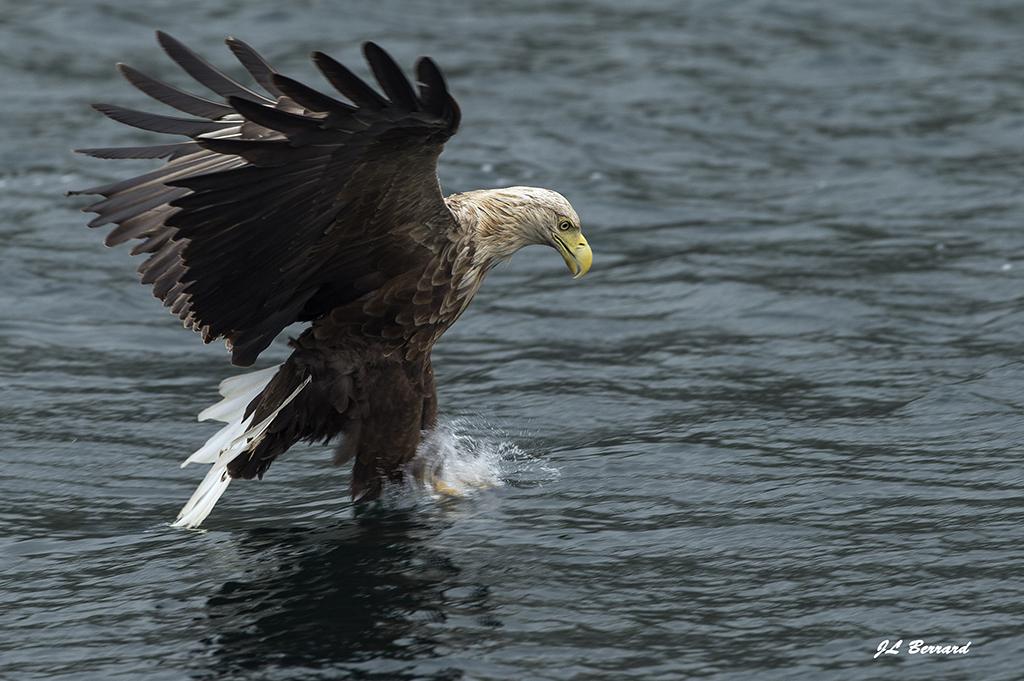 Eté Ecosse Loutres Mammiferes marins Oiseaux du 1 au 9 juillet 2017