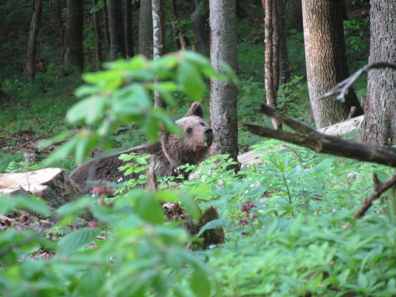 Printemps Slovénie La montagne aux ours du 22 au 29/05/2020 - Privé - 1 place disponible