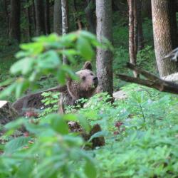 Printemps Slovénie La montagne aux ours du 22 au 29/05/2020 - Privé