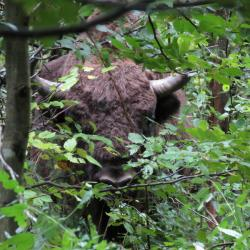 Automne Pologne Le bison et le Loup du 1 au 11 Octobre 2018 3 places disponibles