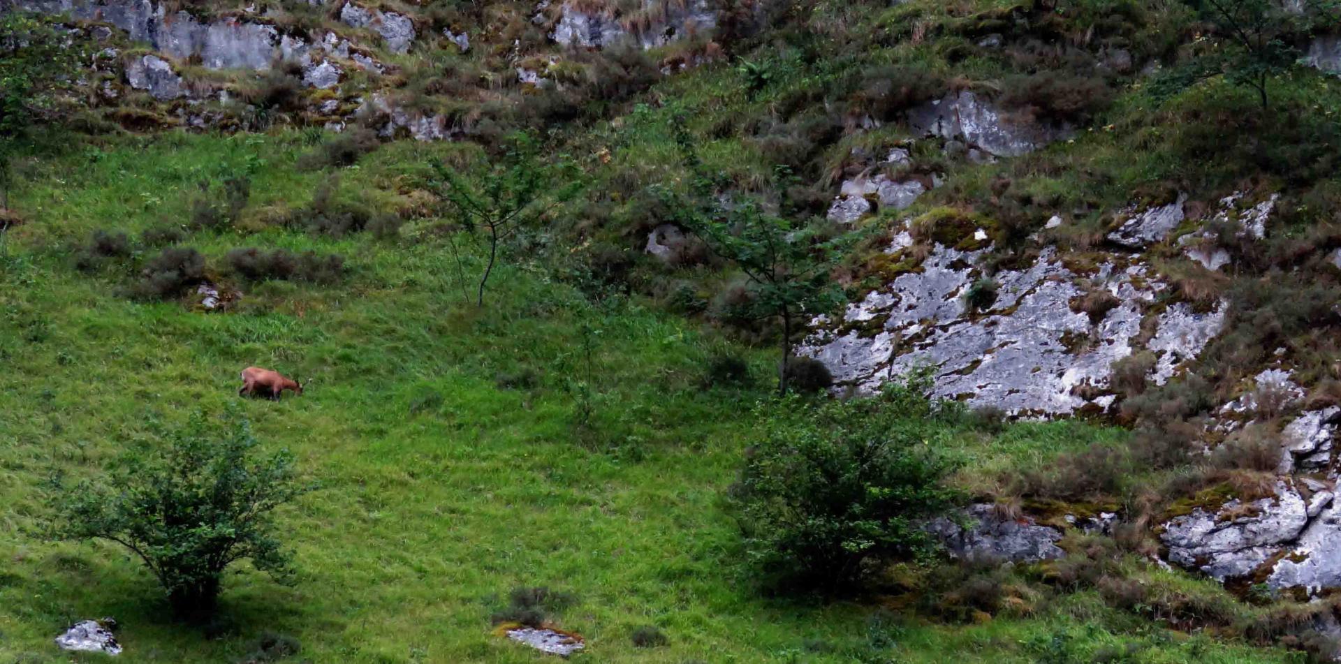 Eté Espagne Asturies Ours loups du 10 au 17 juin 2017