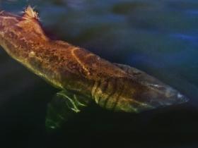 Requin pèlerin VOYAGE ECOSSE LOUTRE