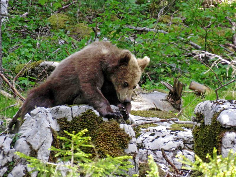 Printemps Slovénie La montagne au ours du 13 au 21 mai 2017