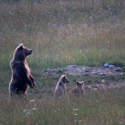 Printemps Slovénie La montagne aux ours du 22 au 29/05/2021 - 1 place disponible Privé