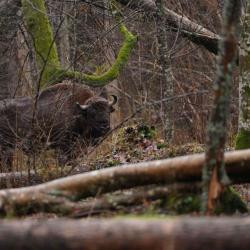 Printemps Pologne Forêt Impériale du 08 au 18/04 2019 - 2 places disponibles